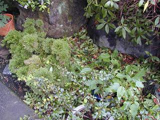 庭の樹木と花~その2_b0089338_9403474.jpg