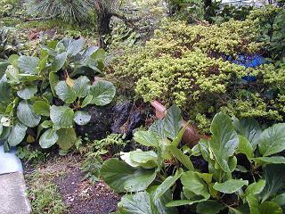 庭の樹木と花~その2_b0089338_9404853.jpg