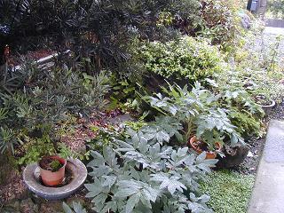 庭の樹木と花~その2_b0089338_9422542.jpg