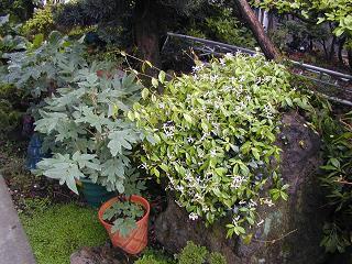 庭の樹木と花~その2_b0089338_9424224.jpg