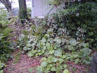 庭の樹木と花~その2_b0089338_9443158.jpg