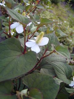 庭の樹木と花~その2_b0089338_9453522.jpg