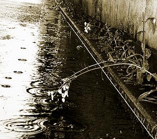 時々タイムスリップ 〜雨のにおい 編〜_e0071652_1045562.jpg