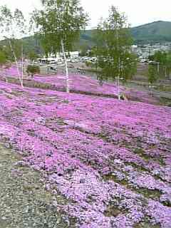 北海道日記part2☆_d0046460_3281713.jpg