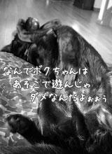 f0015615_2205473.jpg