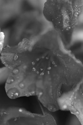 梅雨がはじまるのかも・・。_f0050534_8102381.jpg