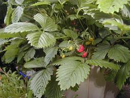 庭の樹木と花~その4_b0089338_0251883.jpg