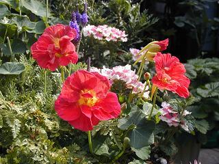庭の樹木と花~その4_b0089338_0274395.jpg