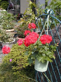 庭の樹木と花~その4_b0089338_028065.jpg