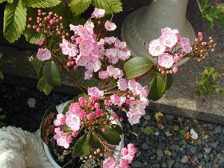 庭の樹木と花~その4_b0089338_082549.jpg