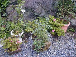 庭の樹木と花~その5_b0089338_23544219.jpg