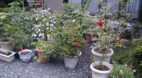 庭の樹木と花~その5_b0089338_23545040.jpg