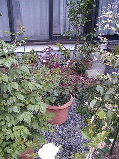 庭の樹木と花~その5_b0089338_23545885.jpg