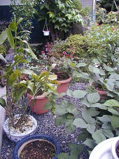 庭の樹木と花~その5_b0089338_23551877.jpg