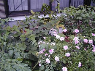 庭の樹木と花~その5_b0089338_23553166.jpg