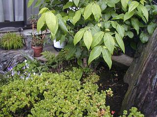 庭の樹木と花~その5_b0089338_2355456.jpg