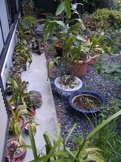 庭の樹木と花~その5_b0089338_2355991.jpg