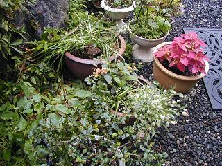 庭の樹木と花~その5_b0089338_2356096.jpg