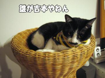 f0046866_20143616.jpg