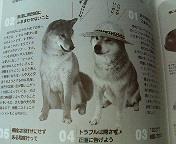 『Shi-Ba』(辰巳出版)7月号の発売日です。_b0011075_10265589.jpg