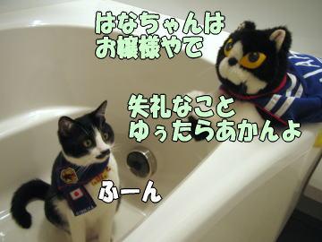 b0041182_2033379.jpg