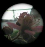 a0050838_18152214.jpg