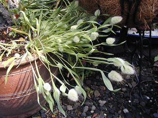 庭の樹木と花~その5_b0089338_033961.jpg