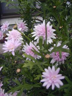 庭の樹木と花~その5_b0089338_0352212.jpg