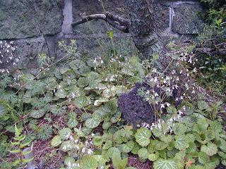 庭の樹木と花~その6_b0089338_0394891.jpg