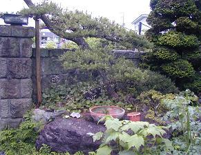 庭の樹木と花~その6_b0089338_0395921.jpg