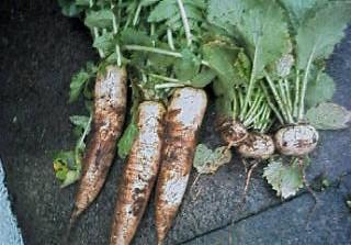 野菜とか  5/30_e0029584_2221125.jpg