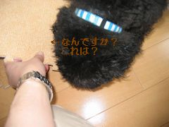 b0073589_162896.jpg