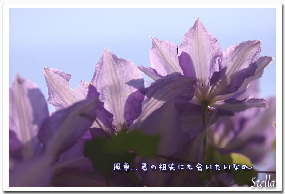 d0015026_1935137.jpg