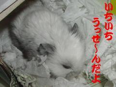 b0016983_9202019.jpg