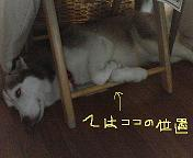 b0102102_2140218.jpg