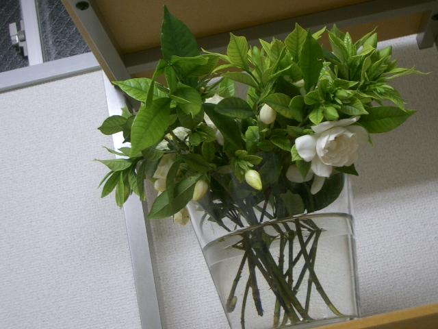 花を買うこと_a0042928_22221063.jpg