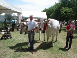 再び牛祭り_f0106597_1392397.jpg
