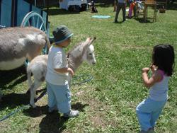 再び牛祭り_f0106597_147095.jpg