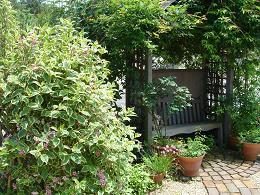 6月の庭_e0086738_15115194.jpg