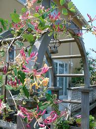 6月の庭_e0086738_15152740.jpg
