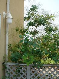 6月の庭_e0086738_15193914.jpg