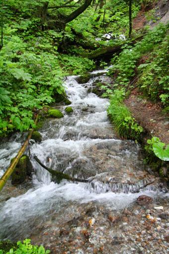 白神山麓の十二湖の新緑4:水と新緑_e0054299_1992045.jpg