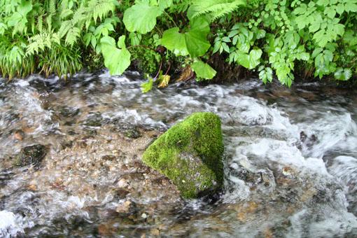 白神山麓の十二湖の新緑4:水と新緑_e0054299_1993151.jpg