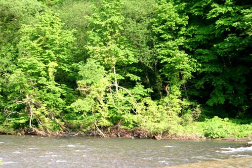 白神山麓の十二湖の新緑4:水と新緑_e0054299_1994528.jpg