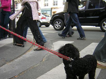 パリを歩けば♪_b0083925_12193344.jpg