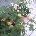 c0020127_15332485.jpg