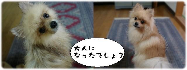 b0078073_2321832.jpg