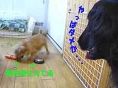 d0043478_20124929.jpg