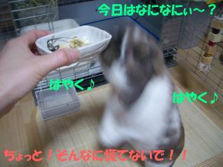 b0109692_1633529.jpg