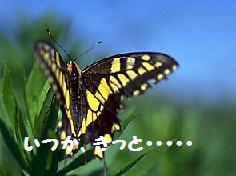 f0065199_23441234.jpg